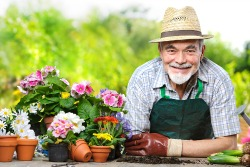 Portrait of senior man in the flower garden